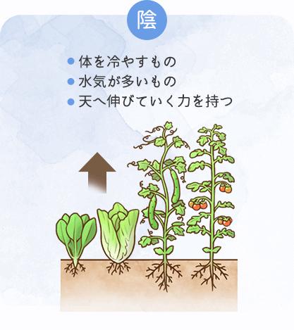 陰の性質を持つ食材の特徴