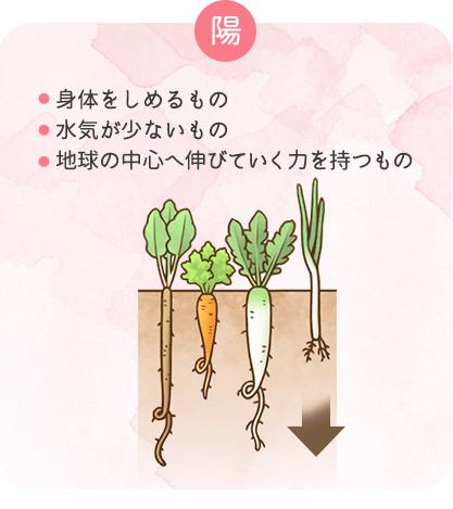 陽の性質を持つ食材の特徴